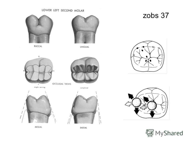 zobs 37