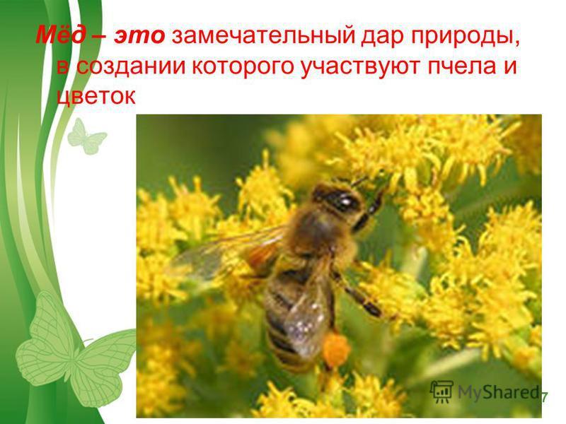 Free Powerpoint TemplatesPage 7 Мёд – это замечательный дар природы, в создании которого участвуют пчела и цветок