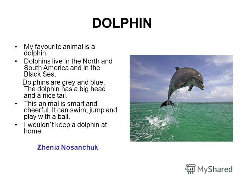 DOLPHIN My favourite animal is a dolphin. Dolphins live in the North and South America and in the Black Sea. Dolphins are grey and blue. The dolphin has a big head and a nice tail. This animal is smart and cheerful. It can swim, jump and play with a