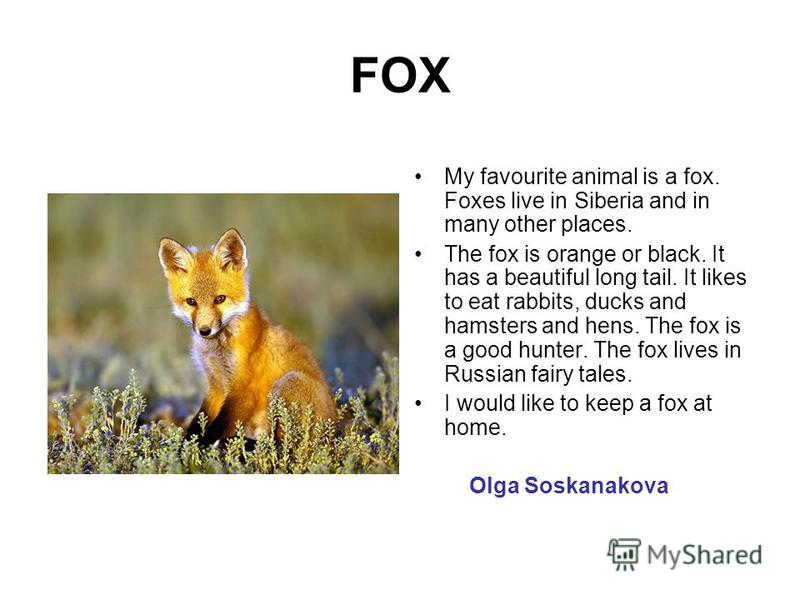 FOX My favourite animal is a fox. Foxes live in Siberia and in many other places. The fox is orange or black. It has a beautiful long tail. It likes to eat rabbits, ducks and hamsters and hens. The fox is a good hunter. The fox lives in Russian fairy
