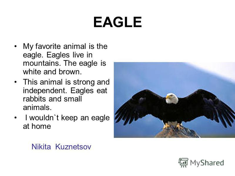 EAGLE My favorite animal is the eagle. Eagles live in mountains. The eagle is white and brown. This animal is strong and independent. Eagles eat rabbits and small animals. I wouldn`t keep an eagle at home Nikita Kuznetsov