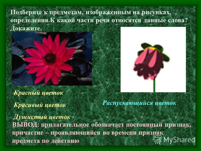 Подберите к предметам, изображенным на рисунках, определения.К какой части речи относятся данные слова? Докажите. Красный цветок Красивый цветок Душистый цветок Распускающийся цветок ВЫВОД: прилагательное обозначьает постоянный признак, причастие – п