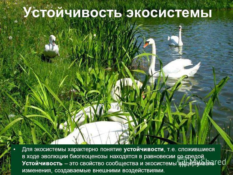 Устойчивость экосистемы Для экосистемы характерно понятие устойчивости, т.е. сложившиеся в ходе эволюции биогеоценозы находятся в равновесии со средой. Устойчивость – это свойство сообщества и экосистемы выдерживать изменения, создаваемые внешними во