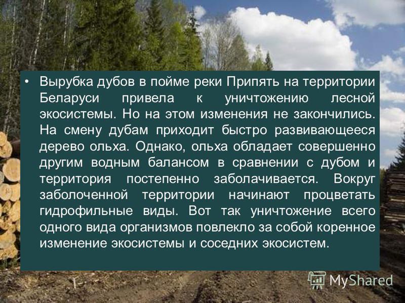 Вырубка дубов в пойме реки Припять на территории Беларуси привела к уничтожению лесной экосистемы. Но на этом изменения не закончились. На смену дубам приходит быстро развивающееся дерево ольха. Однако, ольха обладает совершенно другим водным балансо