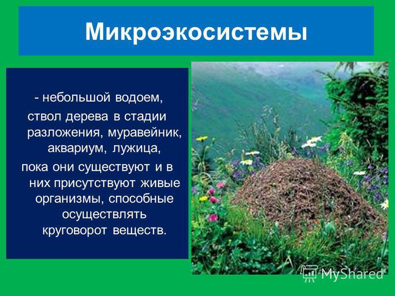 Микроэкосистемы - небольшой водоем, ствол дерева в стадии разложения, муравейник, аквариум, лужица, пока они существуют и в них присутствуют живые организмы, способные осуществлять круговорот веществ.
