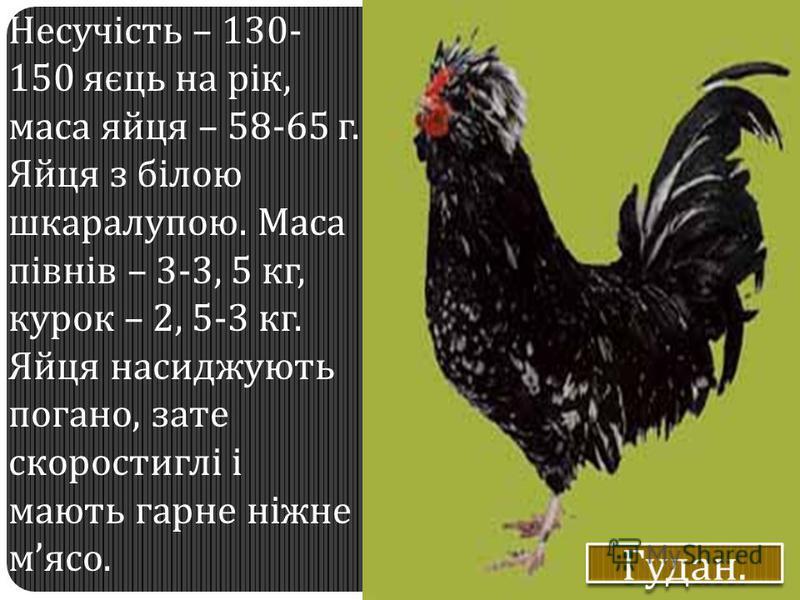 Несучість – 130- 150 яєць на рік, маса яйця – 58-65 г. Яйця з білою шкаралупою. Маса півнів – 3-3, 5 кг, курок – 2, 5-3 кг. Яйця насиджують погано, зате скоростиглі і мають гарне ніжне мясо.