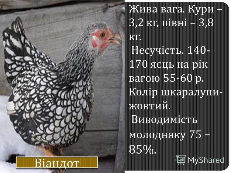 Жива вага. Кури – 3,2 кг, півні – 3,8 кг. Несучість. 140- 170 яєць на рік вагою 55-60 р. Колір шкаралупи- жовтий. Виводимість молодняку 75 – 85%.