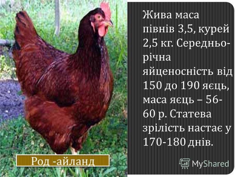 Жива маса півнів 3,5, курей 2,5 кг. Середньо- річна яйценосність від 150 до 190 яєць, маса яєць – 56- 60 р. Статева зрілість настає у 170-180 днів.