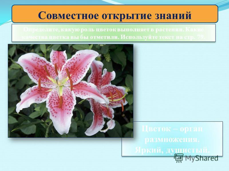 Совместное открытие знаний Определите, какую роль цветок выполняет в растении. Какие качества цветка вы бы отметили. Используйте текст на стр. 79. Цветок – орган размножения. Яркий, душистый. Цветок – орган размножения. Яркий, душистый.