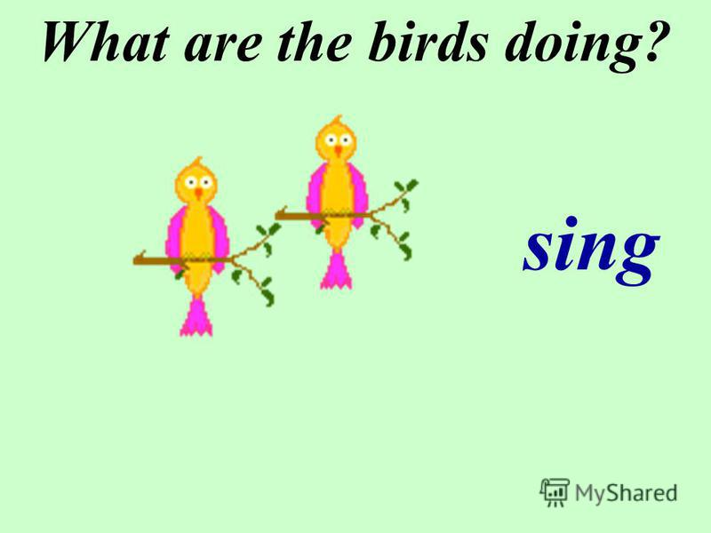 What are the birds doing? sing