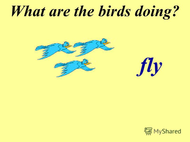 What are the birds doing? fly