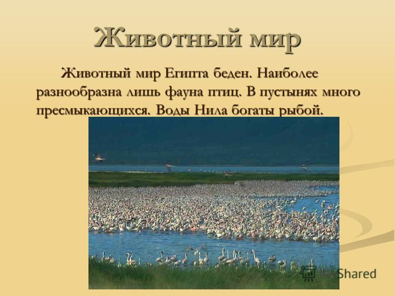 Животный мир Животный мир Египта беден. Наиболее разнообразна лишь фауна птиц. В пустынях много пресмыкающихся. Воды Нила богаты рыбой.