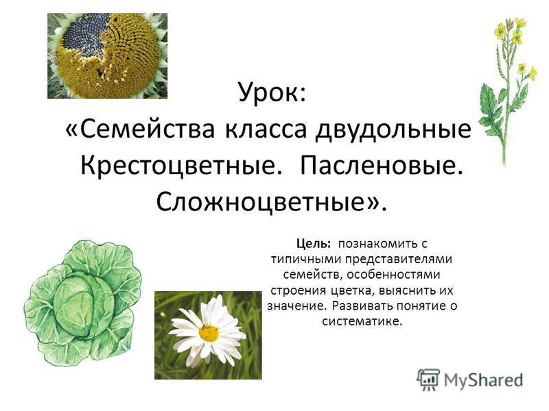 Урок: «Семейства класса двудольные. Крестоцветные. Пасленовые. Сложноцветные». Цель: познакомить с типичными представителями семейств, особенностями строения цветка, выяснить их значение. Развивать понятие о систематике.