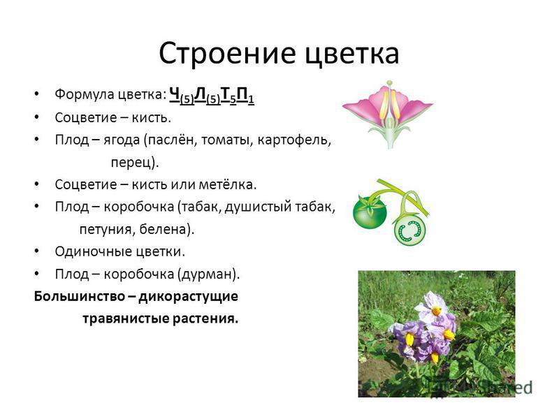 Формула картофеля цветка