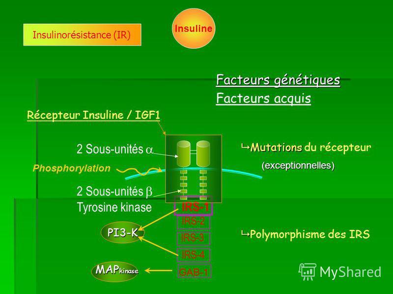 Récepteur Insuline / IGF1 2 Sous-unités Tyrosine kinase IRS-1 IRS-2 IRS-3 IRS-4 Mutations Mutations du récepteur Polymorphisme des IRS Facteurs génétiques Insulinorésistance (IR) (exceptionnelles) PI3-K MAP kinase Insuline GAB-1 Phosphorylation Facte