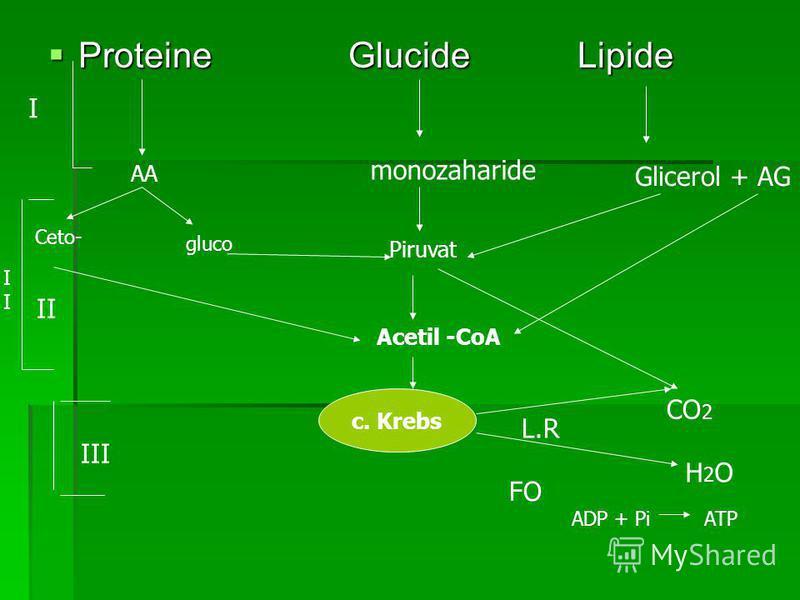 Proteine Glucide Lipide Proteine Glucide Lipide AA monozaharide Glicerol + AG Piruvat Acetil -CoA c. Krebs H2OH2O L.R FO CO 2 gluco Ceto- I I II III ADP + PiATP