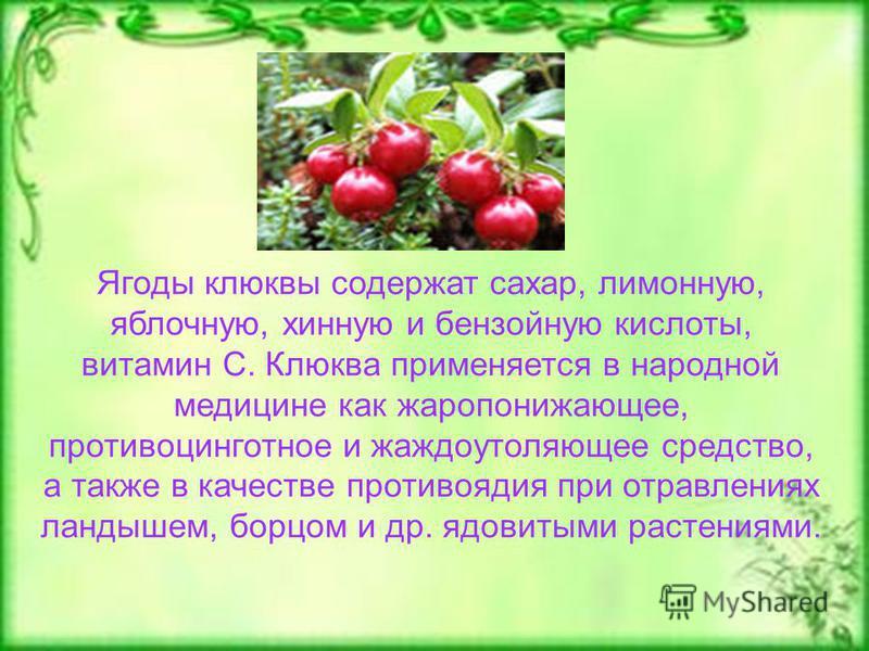 Ягоды клюквы содержат сахар, лимонную, яблочную, хинную и бензойную кислоты, витамин С. Клюква применяется в народной медицине как жаропонижающее, противоцинготное и жаждоутоляющее средство, а также в качестве противоядия при отравлениях ландышем, бо