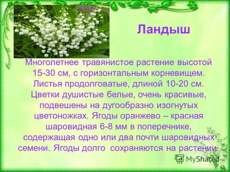 Ландыш Многолетнее травянистое растение высотой 15-30 см, с горизонтальным корневищем. Листья продолговатые, длиной 10-20 см. Цветки душистые белые, очень красивые, подвешены на дугообразно изогнутых цветоножках. Ягоды оранжево – красная шаровидная 6