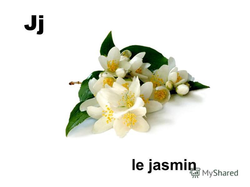 Jj le jasmin