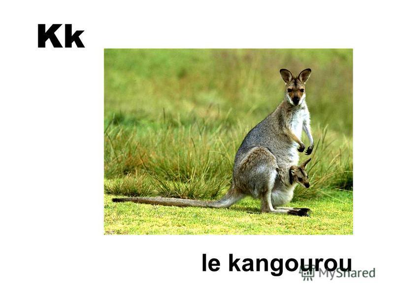 Kk le kangourou