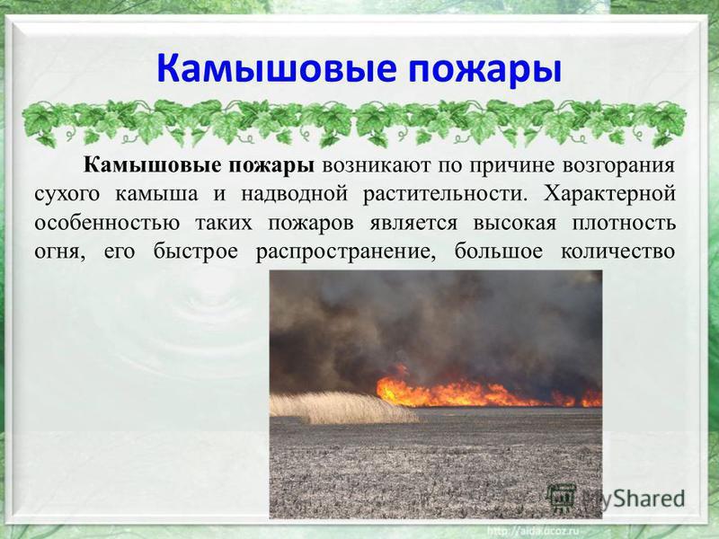 Камышовые пожары Камышовые пожары возникают по причине возгорания сухого камыша и надводной растительности. Характерной особенностью таких пожаров является высокая плотность огня, его быстрое распространение, большое количество дыма.
