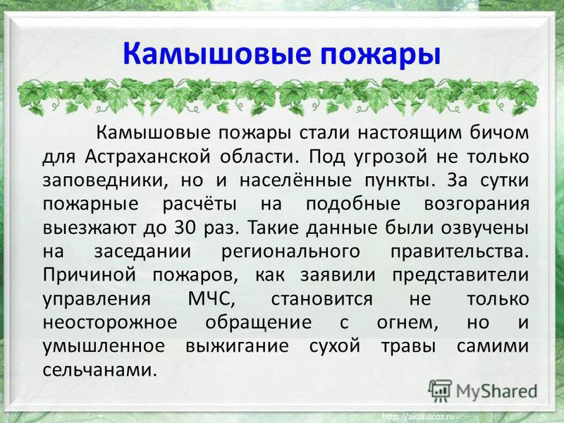 Камышовые пожары Камышовые пожары стали настоящим бичом для Астраханской области. Под угрозой не только заповедники, но и населённые пункты. За сутки пожарные расчёты на подобные возгорания выезжают до 30 раз. Такие данные были озвучены на заседании