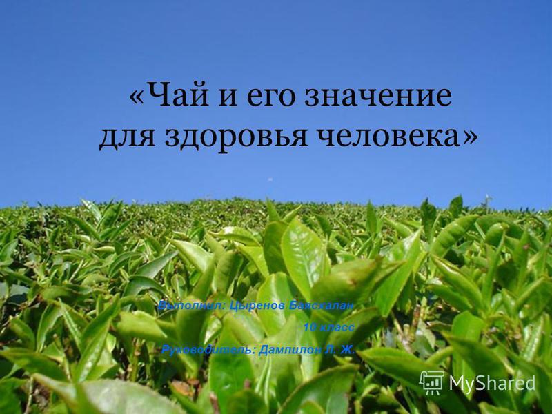 «Чай и его значение для здоровья человека» Выполнил: Цыренов Баясхалан 10 класс Руководитель: Дампилон Л. Ж.