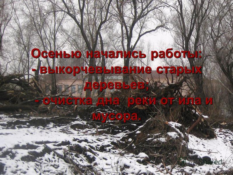 Осенью начались работы: - выкорчевывание старых деревьев; - очистка дна реки от ила и мусора.