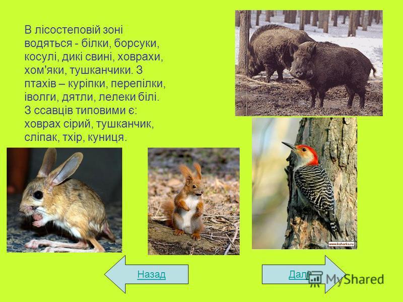 В лісостеповій зоні водяться - білки, борсуки, косулі, дикі свині, ховрахи, хом'яки, тушканчики. З птахів – куріпки, перепілки, іволги, дятли, лелеки білі. З ссавців типовими є: ховрах сірий, тушканчик, сліпак, тхір, куниця. ДаліНазад