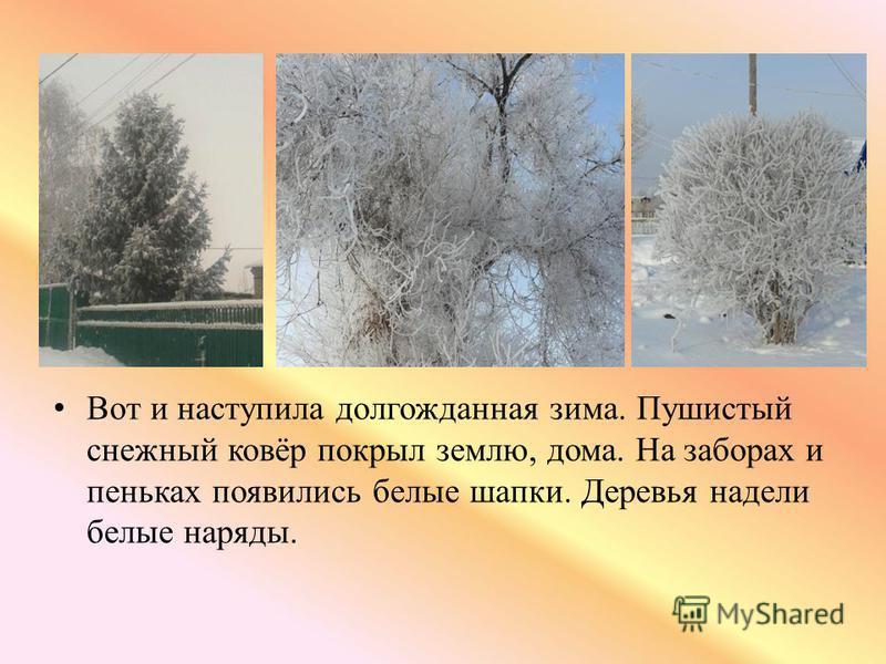 Вот и наступила долгожданная зима. Пушистый снежный ковёр покрыл землю, дома. На заборах и пеньках появились белые шапки. Деревья надели белые наряды.