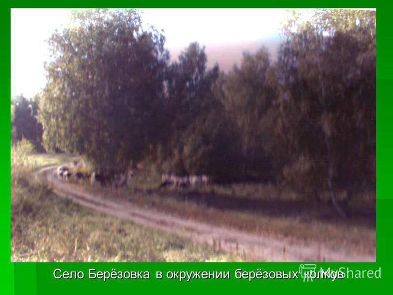 Село Берёзовка в окружении берёзовых колков