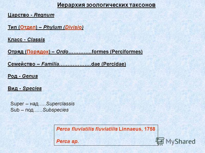 Царство - Regnum Тип (Отдел) – Phylum (Divisio) Класс - Classis Отряд (Порядок) – Ordo…………..formes (Perciformes) Семейство – Familia……………….dae (Percidae) Род - Genus Вид - Species Иерархия зоологических таксонов Super – над.....Superclassis Sub – под