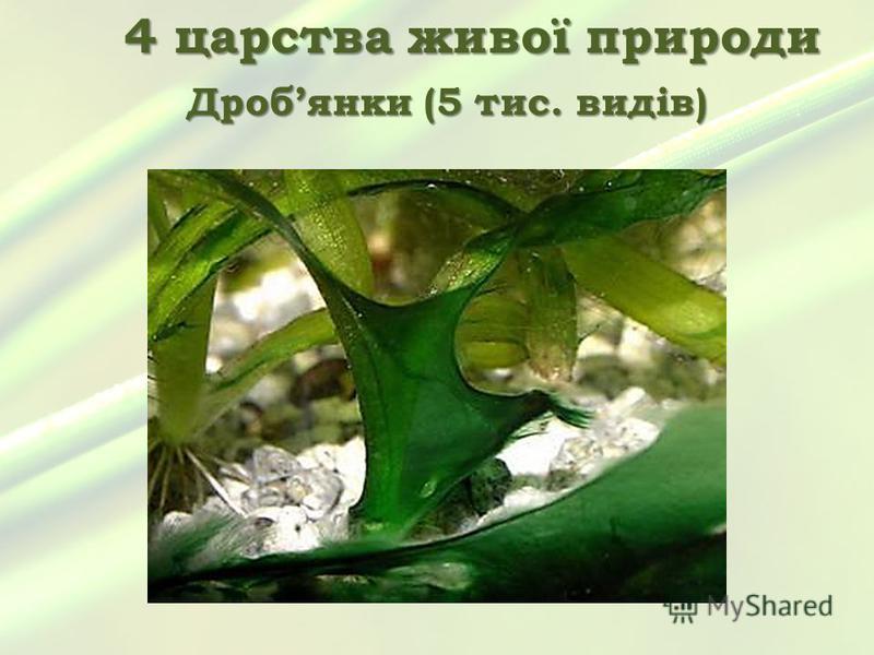 4 царства живої природи Дробянки (5 тис. видів)
