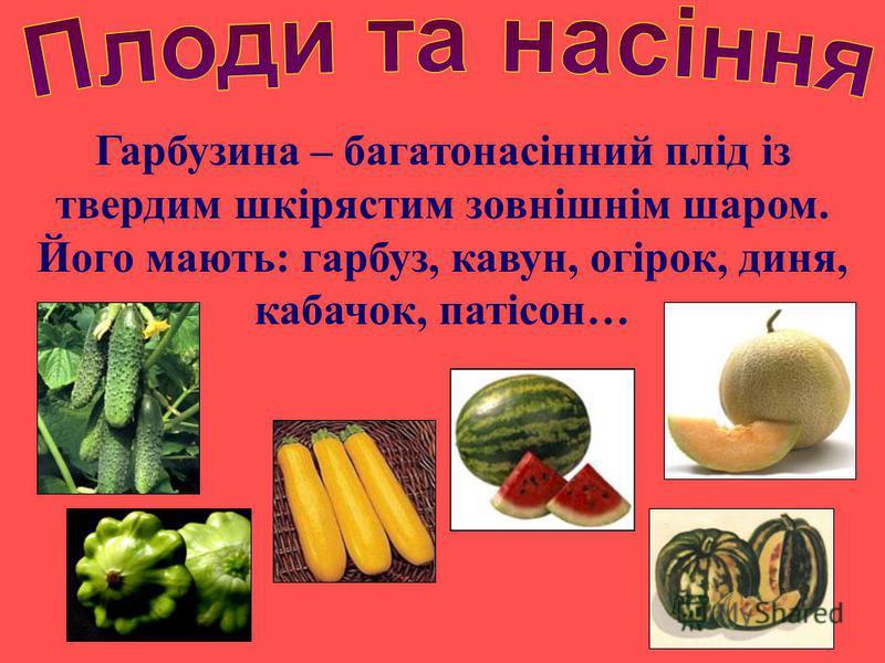 Гарбузина – багатонасінний плід із твердим шкірястим зовнішнім шаром. Його мають: гарбуз, кавун, огірок, диня, кабачок, патісон…