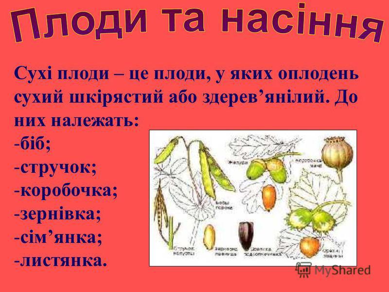 Сухі плоди – це плоди, у яких оплодень сухий шкірястий або здеревянілий. До них належать: -біб; -стручок; -коробочка; -зернівка; -сімянка; -листянка.
