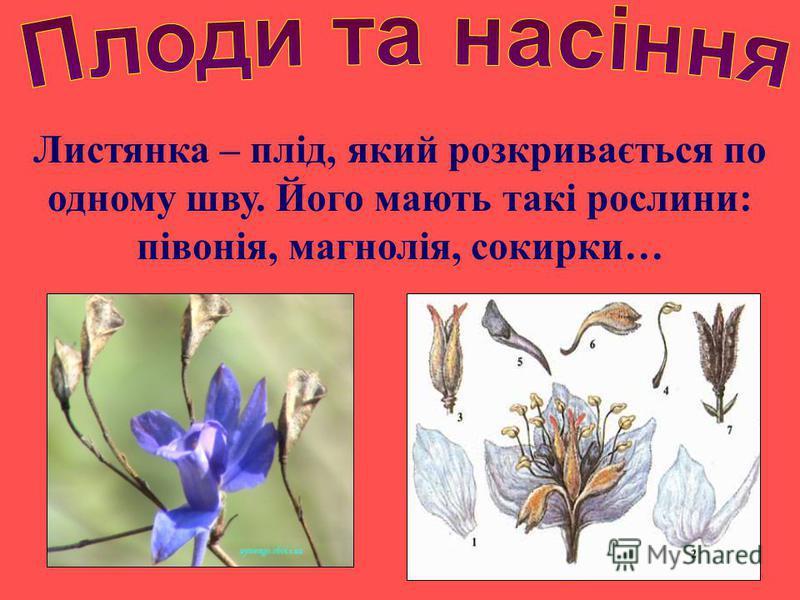 Листянка – плід, який розкривається по одному шву. Його мають такі рослини: півонія, магнолія, сокирки…