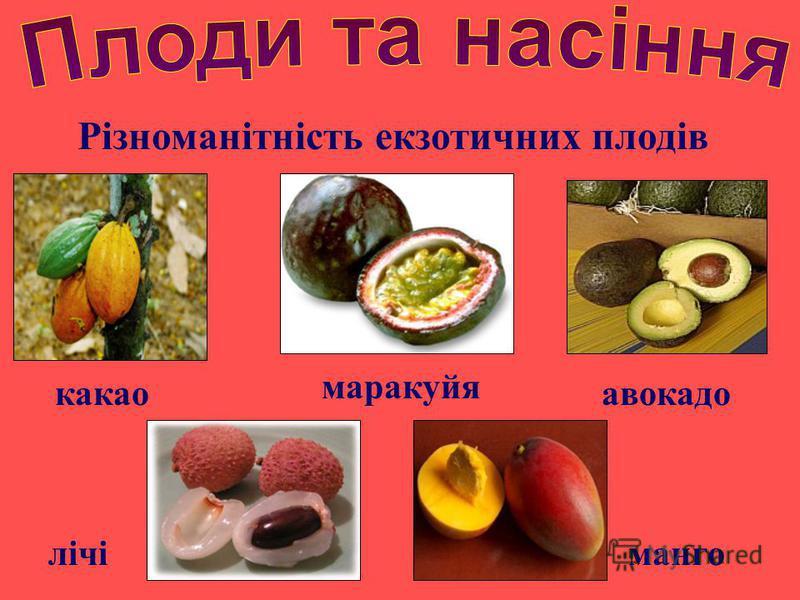 Різноманітність екзотичних плодів авокадокакао манго маракуйя лічі