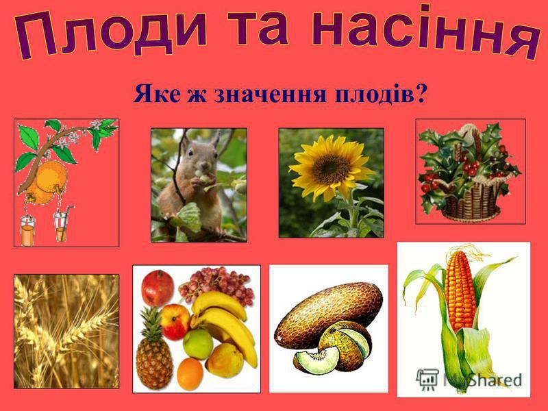 Яке ж значення плодів?