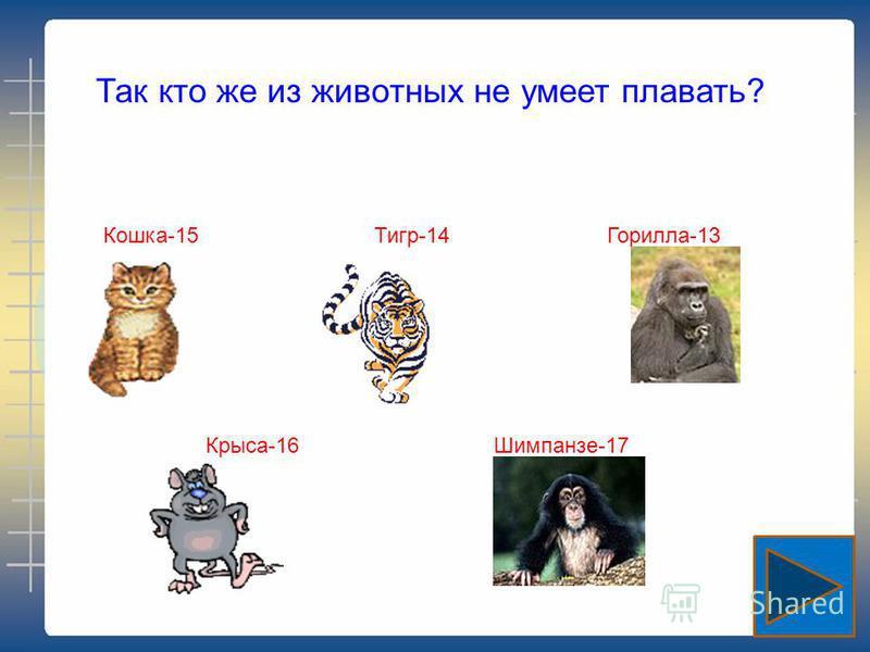 Так кто же из животных не умеет плавать? Кошка-15 Тигр-14 Горилла-13 Крыса-16 Шимпанзе-17