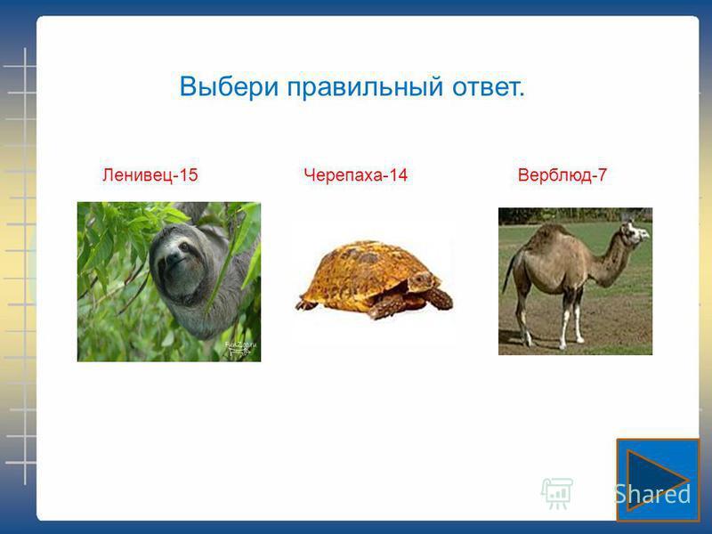 Выбери правильный ответ. Ленивец-15Черепаха-14Верблюд-7
