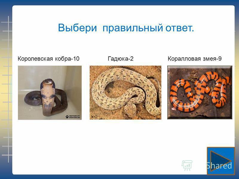 Выбери правильный ответ. Королевская кобра-10 Гадюка-2Коралловая змея-9