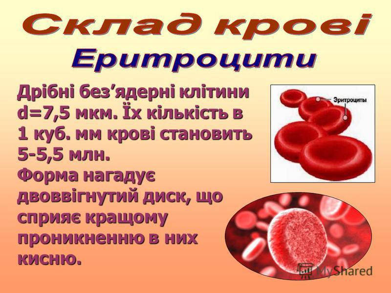 Дрібні безядерні клітини d=7,5 мкм. Їх кількість в 1 куб. мм крові становить 5-5,5 млн. Форма нагадує двоввігнутий диск, що сприяє кращому проникненню в них кисню.