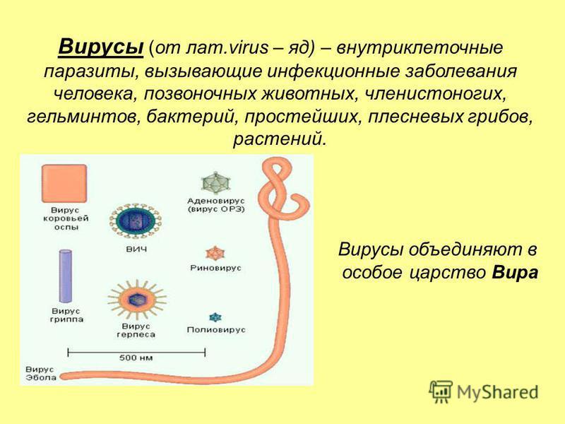 Вирусы (от лат.virus – яд) – внутриклеточные паразиты, вызывающие инфекционные заболевания человека, позвоночных животных, членистоногих, гельминтов, бактерий, простейших, плесневых грибов, растений. Вирусы объединяют в особое царство Вира