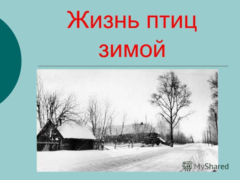 Жизнь птиц зимой