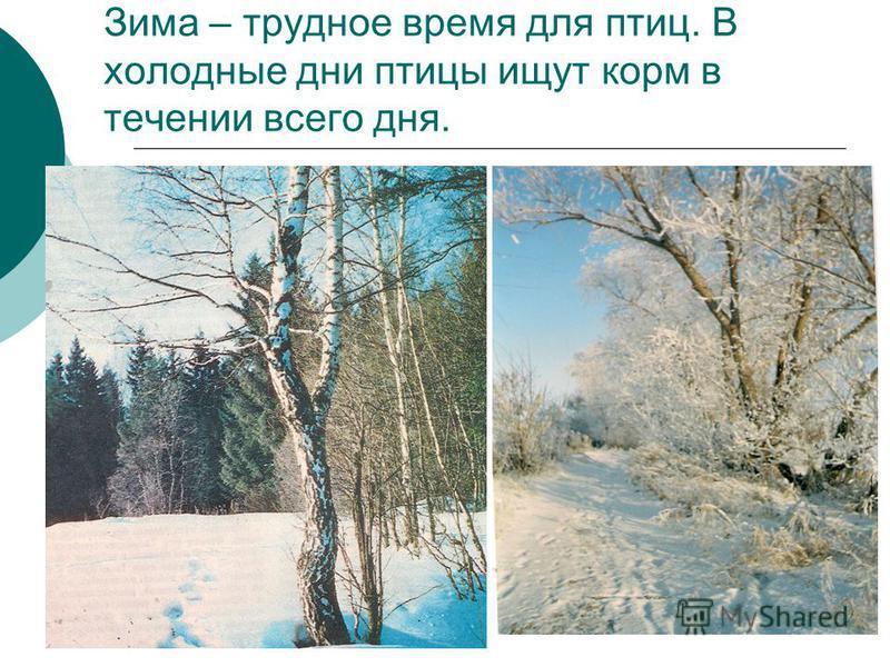 Зима – трудное время для птиц. В холодные дни птицы ищут корм в течении всего дня.