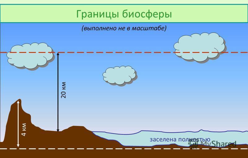 Границы биосферы 20 км 4 км заселена полностью (выполнено не в масштабе)