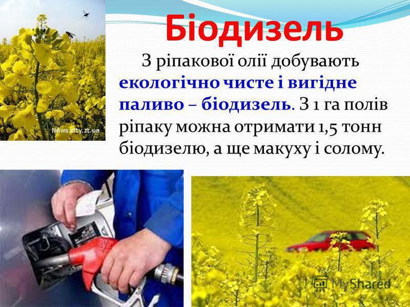 Біодизель З ріпакової олії добувають екологічно чисте і вигідне паливо – біодизель. З 1 га полів ріпаку можна отримати 1,5 тонн біодизелю, а ще макуху і солому.