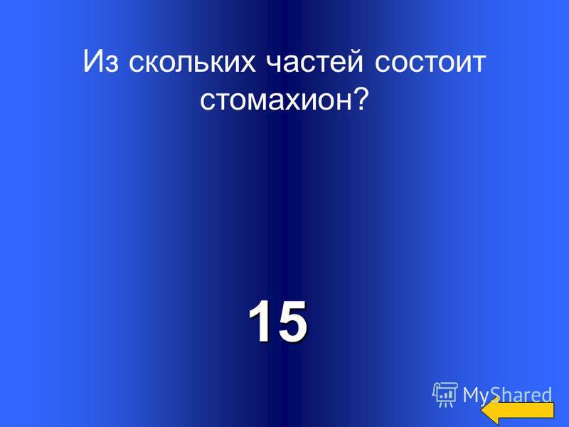 Из скольких кругов составлен слон?8
