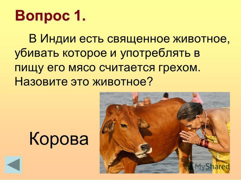 Вопрос 1. В Индии есть священное животное, убивать которое и употреблять в пищу его мясо считается грехом. Назовите это животное? Корова
