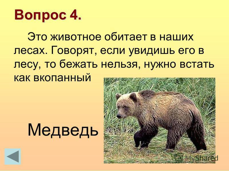 Вопрос 4. Это животное обитает в наших лесах. Говорят, если увидишь его в лесу, то бежать нельзя, нужно встать как вкопанный Медведь